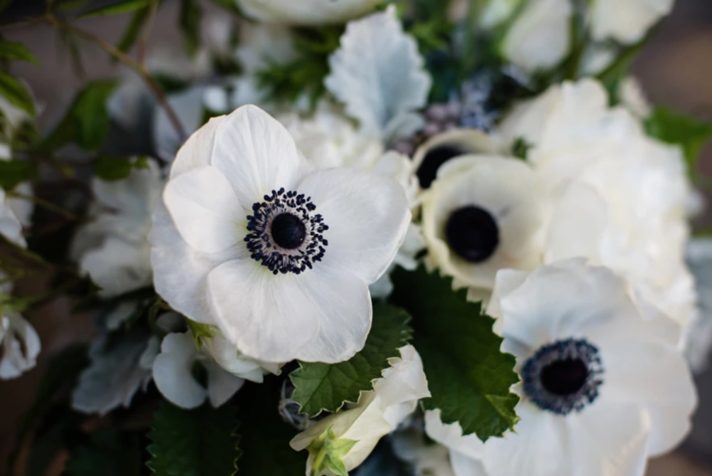 Nataworry Photography - Botanique Flowers