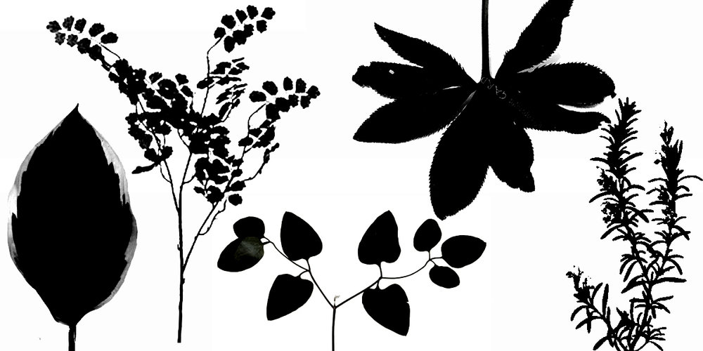 Special Foliage.jpg