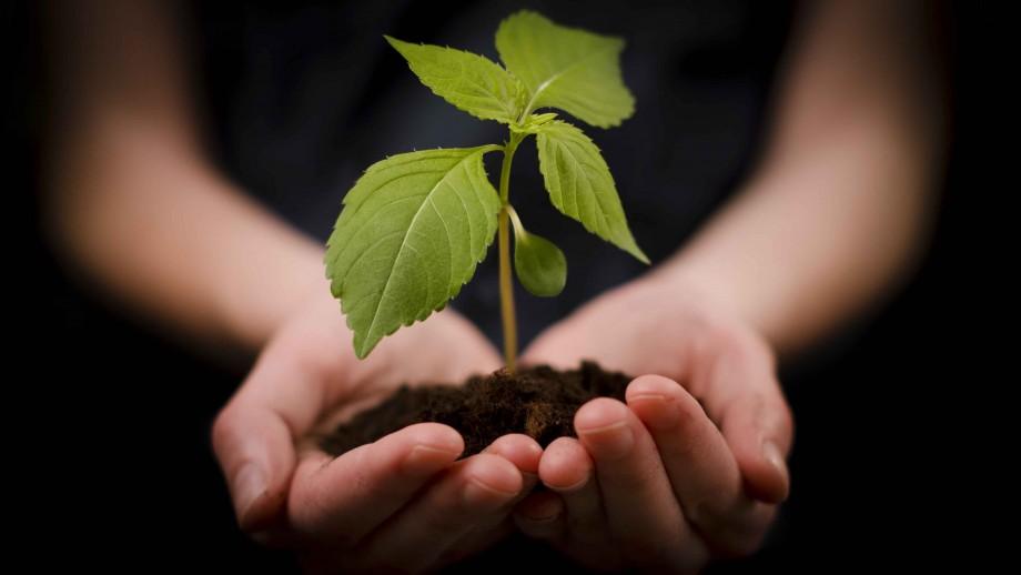 plant based hydrogels allevi bioprint.jpg