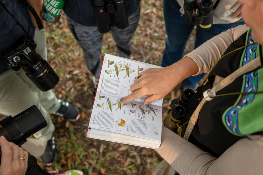 Trip leader Eliana shows the group a Red-Eyed Vireo in her field guide.
