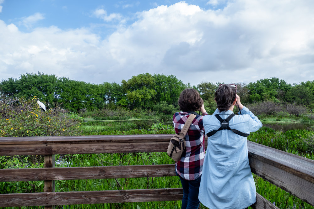Looking for the Roseate Spoonbill.