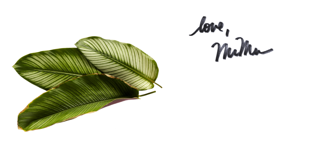 love, mumu + leaves.png