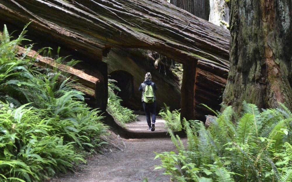 Walk-thru-Redwood-1080x675.jpg