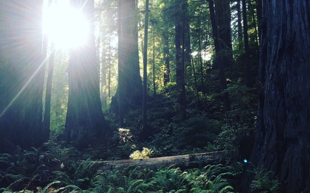 Mother-Tree-1080x675.jpg