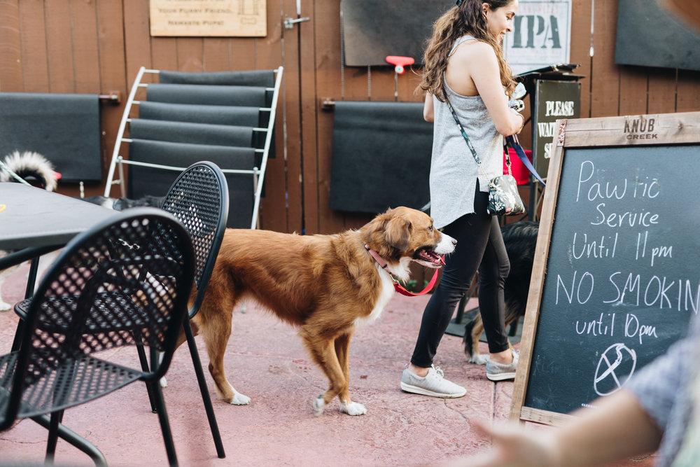 bumble-date-my-dog-x-nylonsaddle-2018-99.jpg