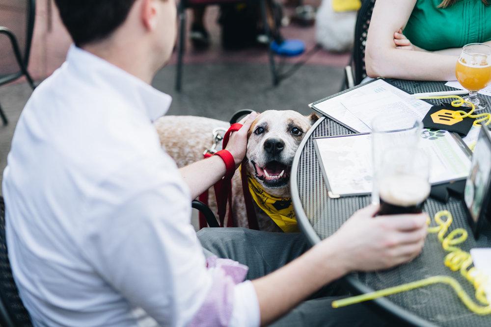 bumble-date-my-dog-x-nylonsaddle-2018-83.jpg