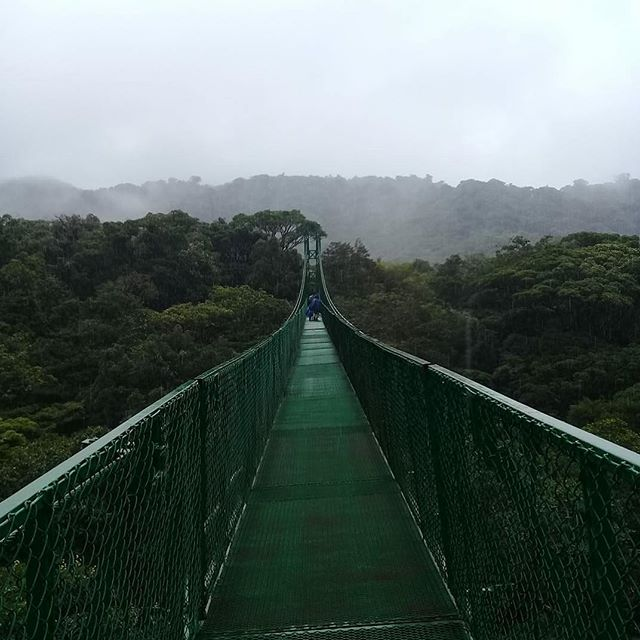 Monte Verde Cloud Forest and hanging Bridges !! Very nice Experience!