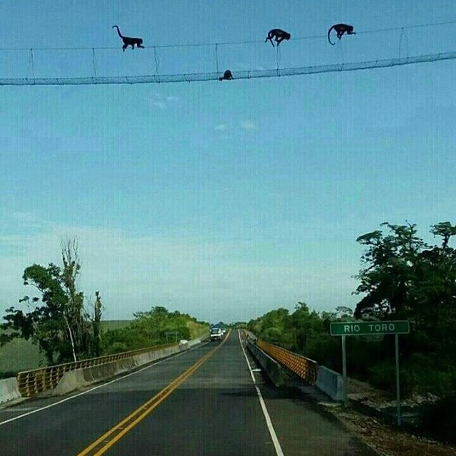 Monkey bridge Costa Rica 🇨🇷