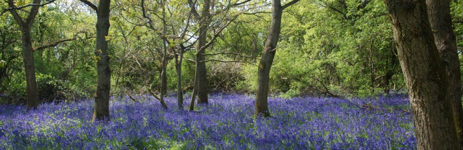 woods bb.jpg