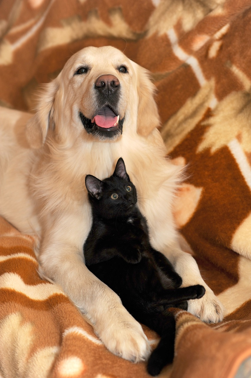 dog-and-cat-2908810_1280.jpg