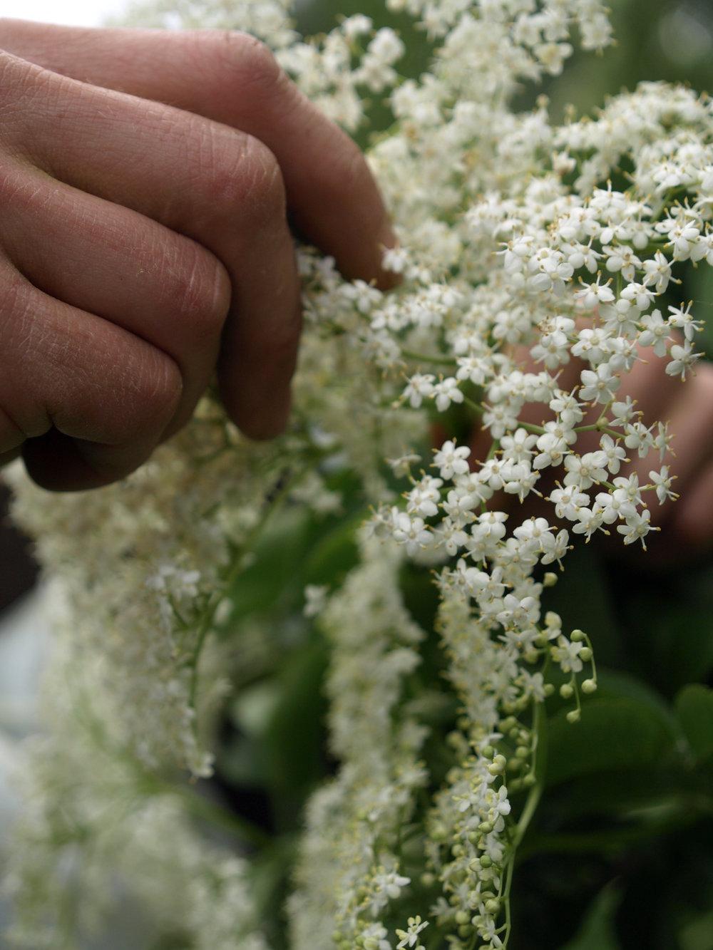 2a oogst bloemen.jpg