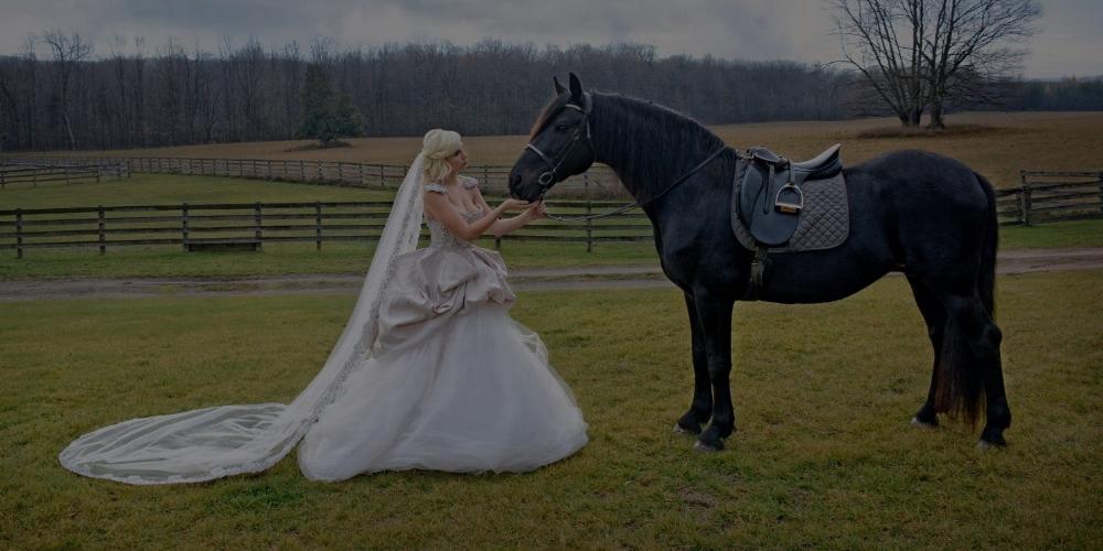 Black stallion -
