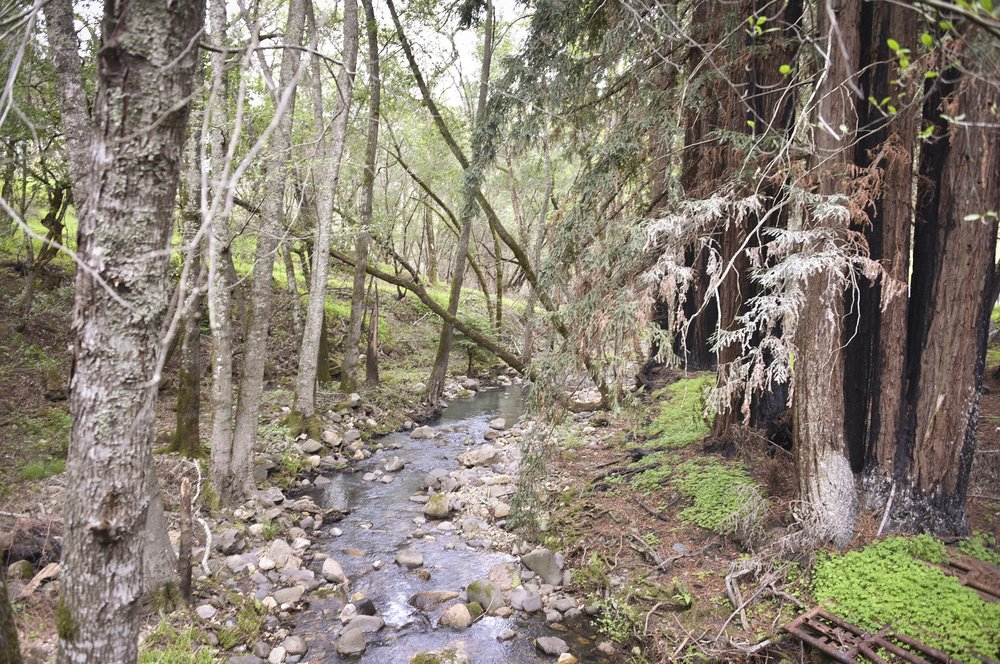 4850_Redwood_Rd_45.jpg