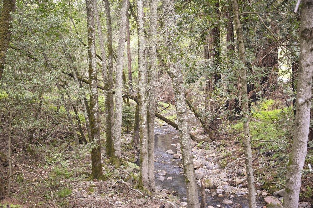 4850_Redwood_Rd_46.jpg