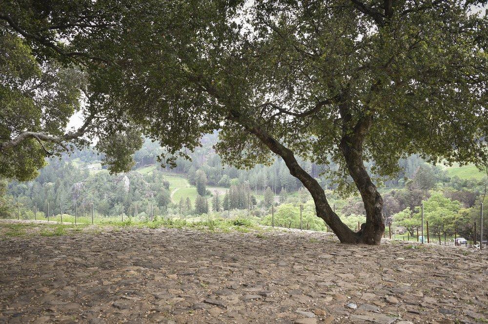 4850_Redwood_Rd_23.jpg