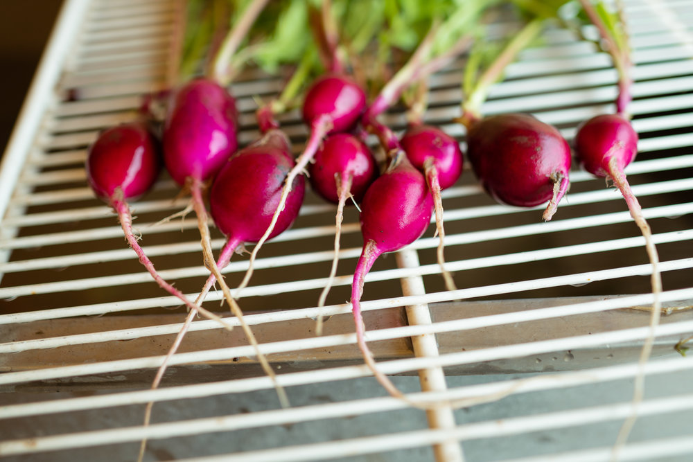 Radishes at Sprig & Root Farm in Clarkston, Montana.