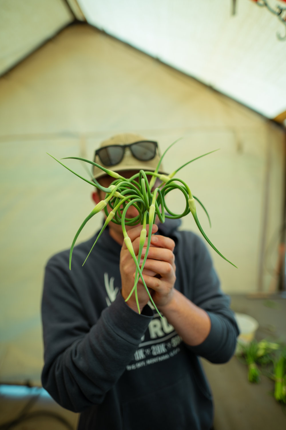 Zach Altman with garlic scapes at Sprig & Root Farm in Clarkston, Montana.