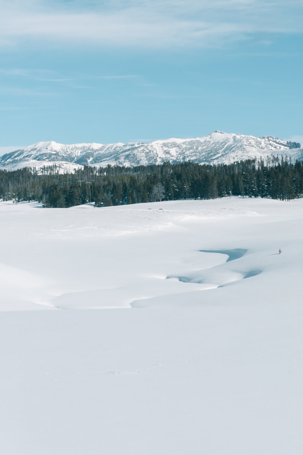 The Absaroka Range rising above the Pelican Valley of Yellowstone National Park.