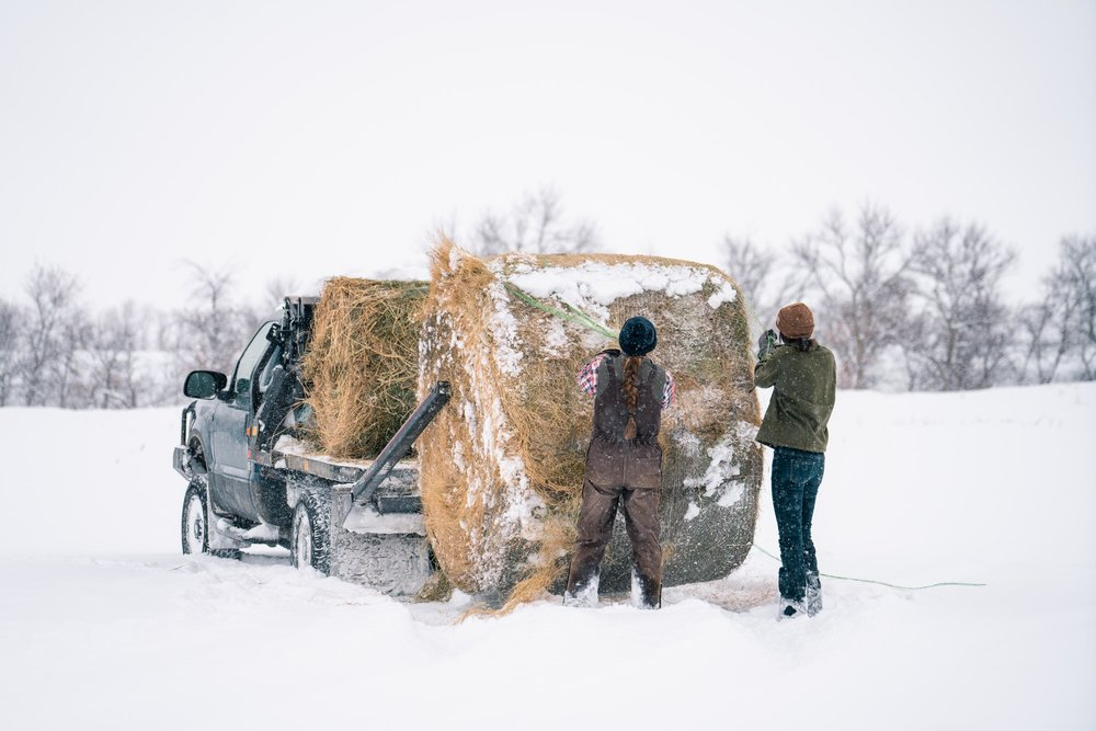 Unrolling hay with Jenna Flatgard and Melissa DiNino in Carter County, Montana
