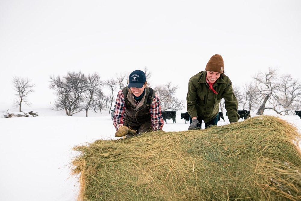 Jenna Flatgard and Melissa DiNino unrolling hay for feeding in eastern Montana.