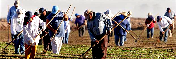 farmworkers.png