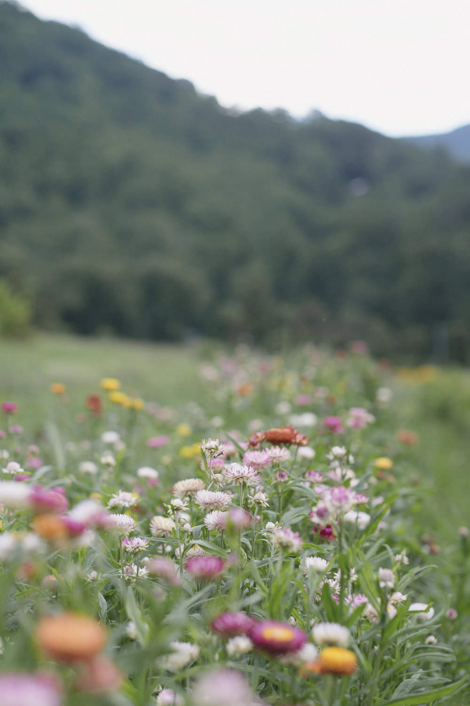 Lady Luck Flower Farm