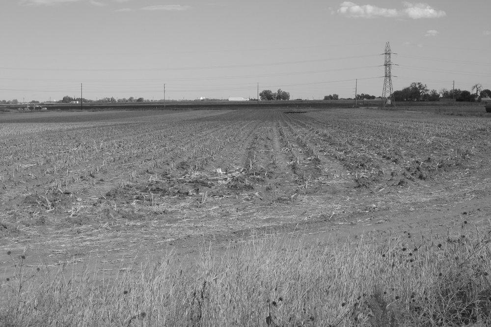46_Farmland_NField.JPG