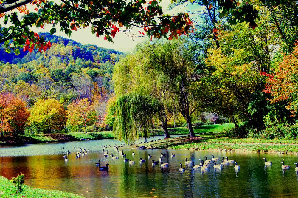 ducks first choice.jpg