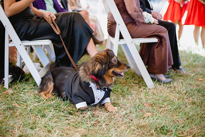 Wedding doggie!