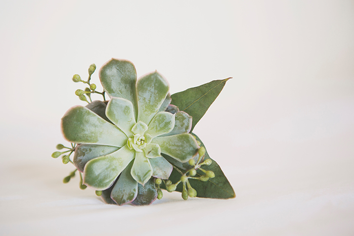 Lovely green succulent boutonniere