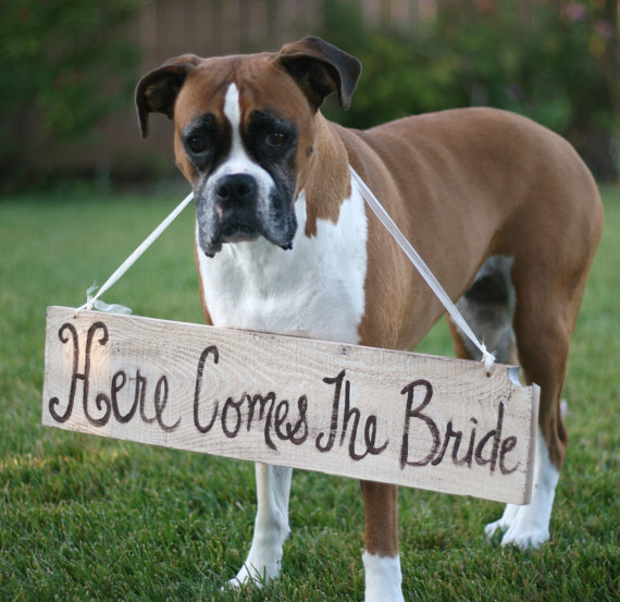 7 fun ways to include your pet in your wedding day Wedpics Blog