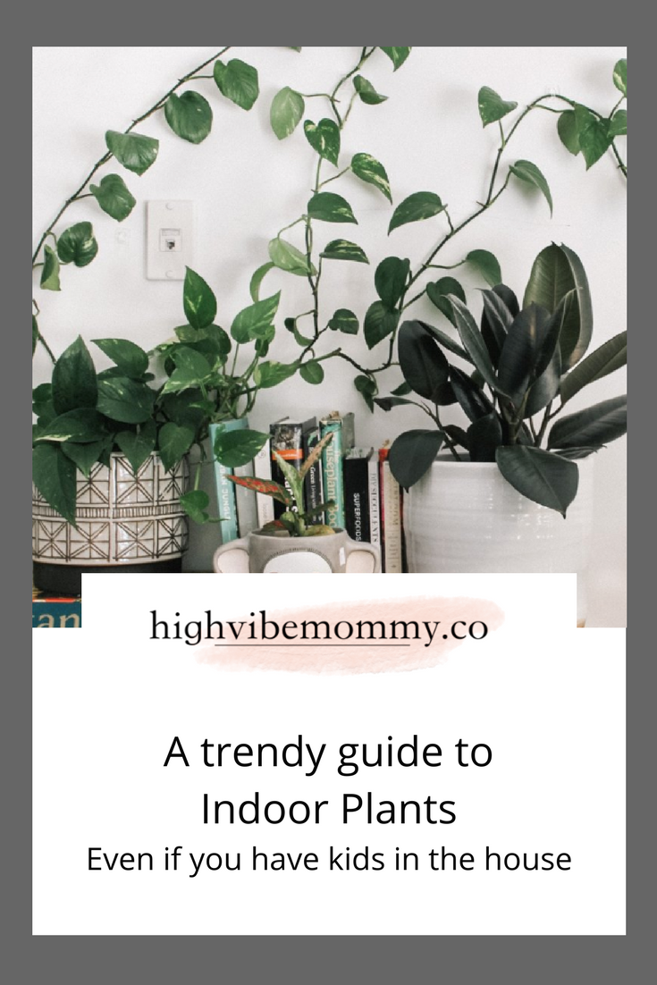 Pro advice for healthy indoor plants.png
