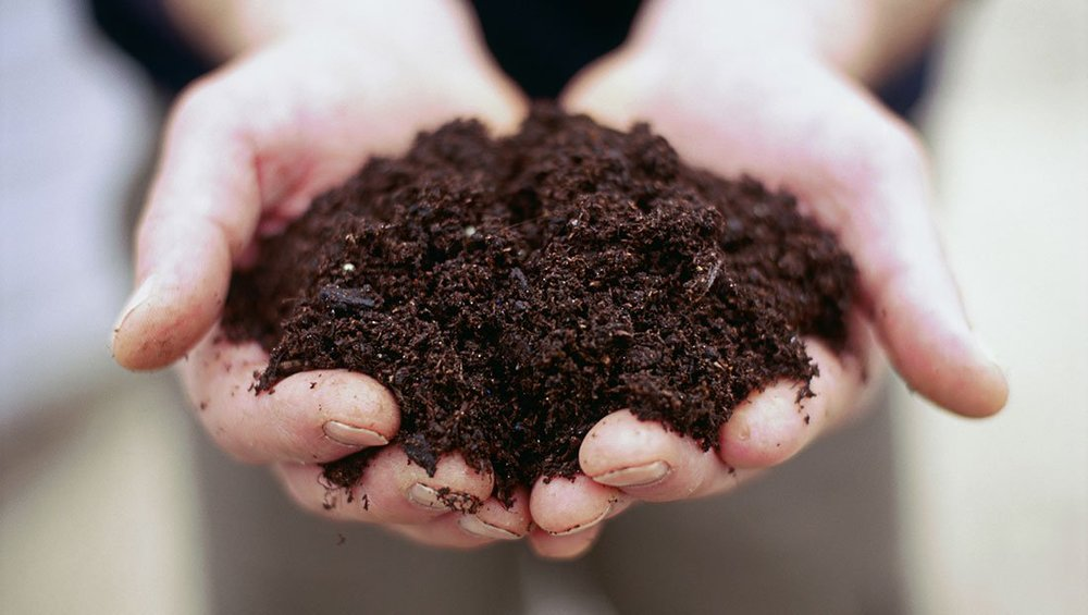 soil_in_hands_-_francesca_yorke.jpg