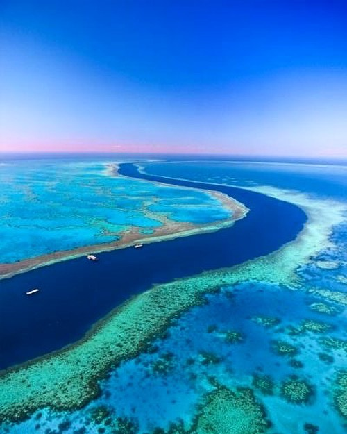 "Following dire warnings of reef die-off after massive coral bleaching in 2016 and 2017, Tourism and Events Queensland has issued a ""positive update"" on the status of Australia's Great Barrier Reef, reporting that some affected areas are showing ""substantial signs of recovery"". The Reef & Rainforest Research Centre (RRRC), a non-profit organisation, has reported signs of recovery due to a milder 2017-18 summer, as well as cooperation among science, industry, and government in supporting the reef's recovery, according to the report issued on Wednesday by the Queensland State Government. _ #greatbarrierreef #coral #coralrecovery #oceanconservation #lamer #coralreef"