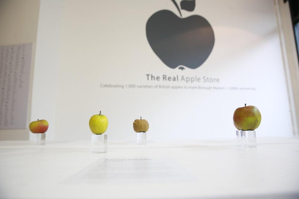 Apples 102.JPG