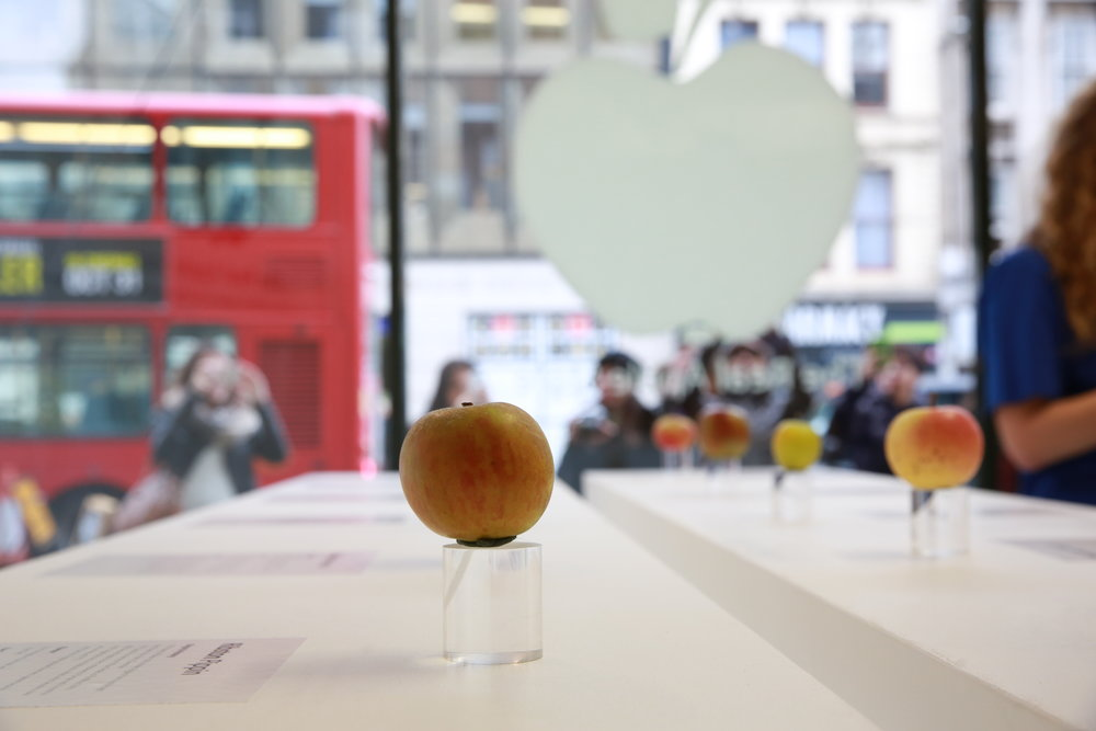 Apples 145.JPG