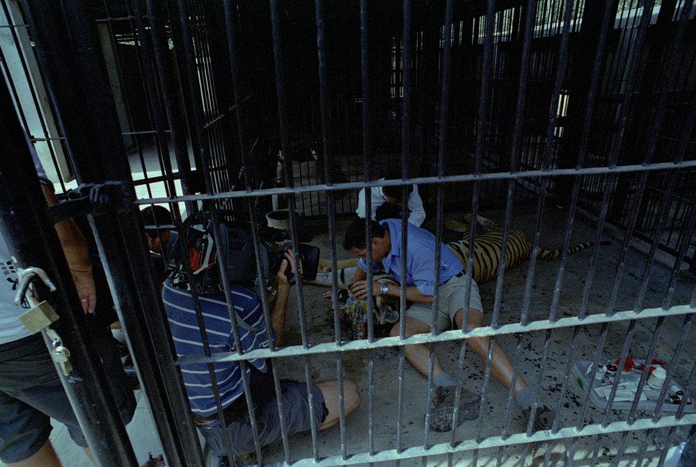 The Jeff Corwin Experience Cambodia Jan26-Feb6-2003 71 copy.jpg