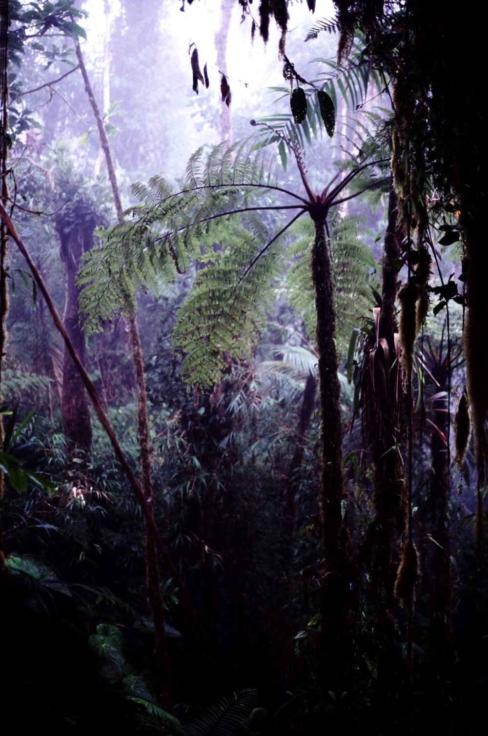 Bosque de Niebla copy.jpg
