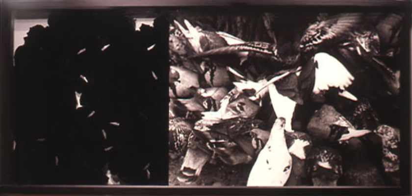 """Passion , 2000, 74"""" x 36"""", Mixed Media, Thermal Pane Glass, Mural Photograph, exact blades, velvet"""