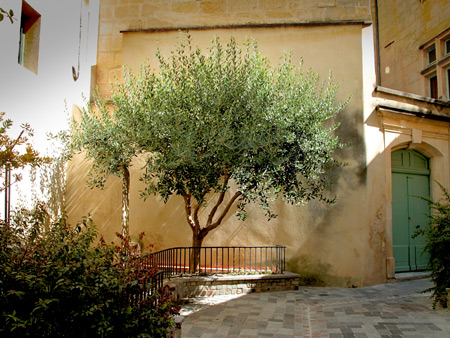 Sun Tree, Arles