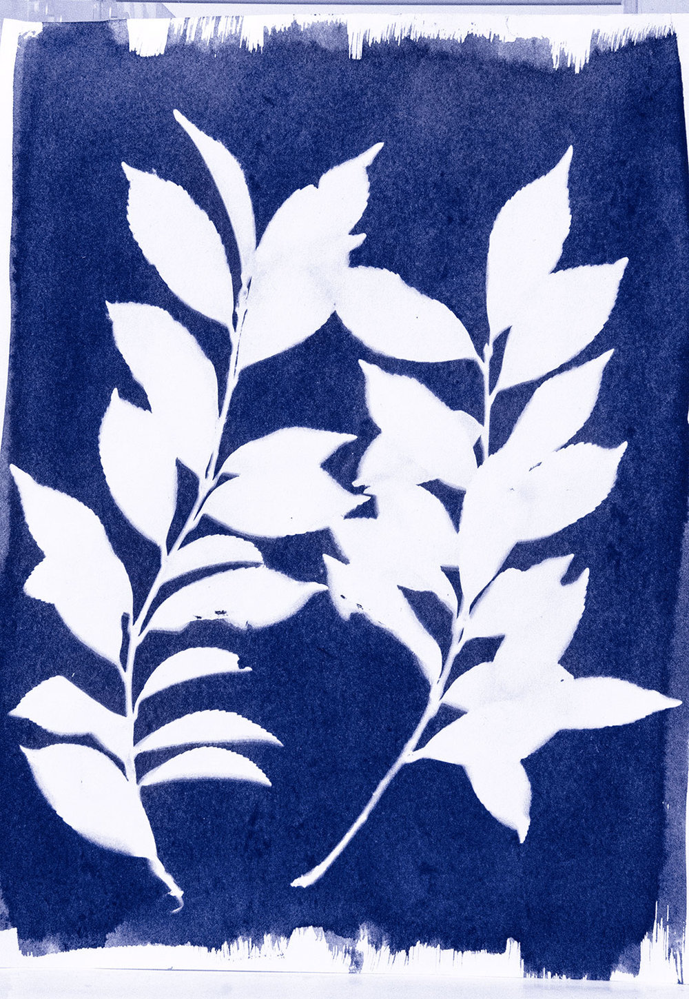 Cyanotype-Prints_1_double-branch_sm_288c.jpg