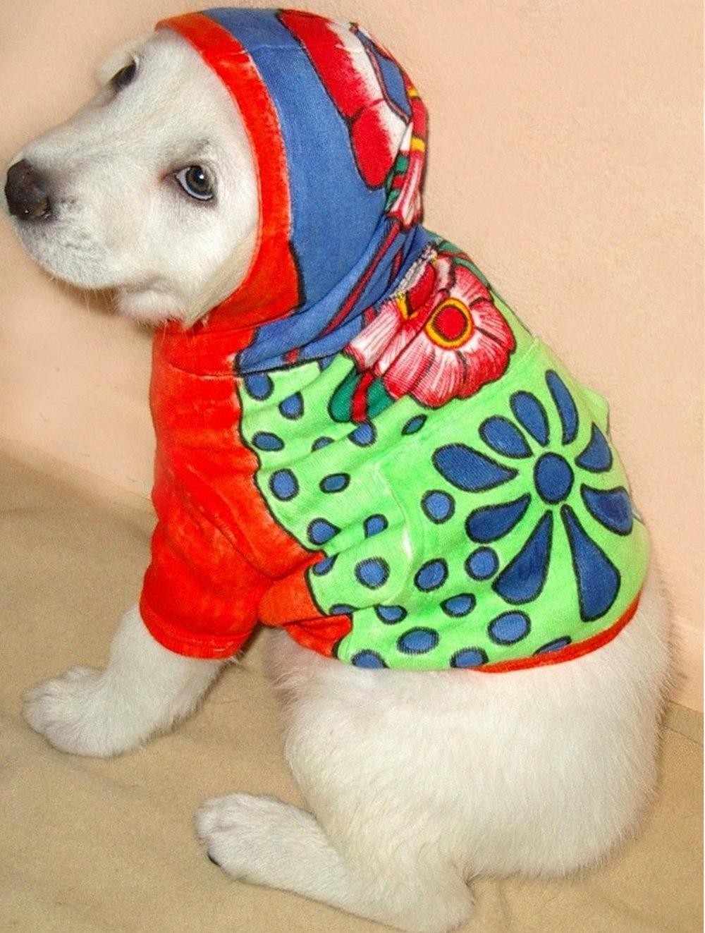 TJ-Dog-hoodie.jpg
