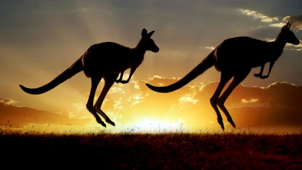 science-take-kangaroos-videoSixteenByNine1050.jpg