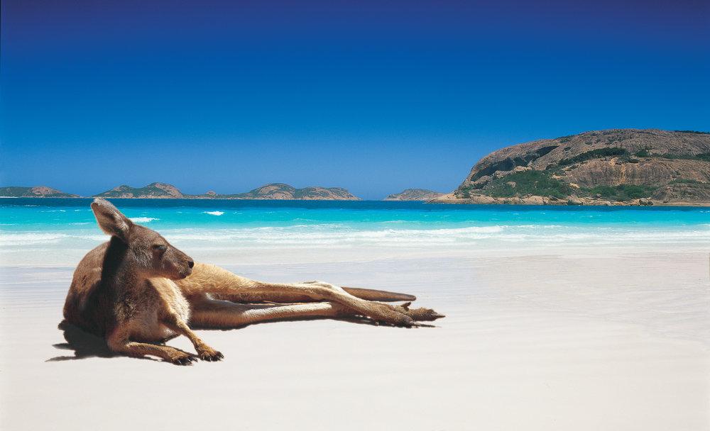 Kangaroo-LuckyBay.jpg