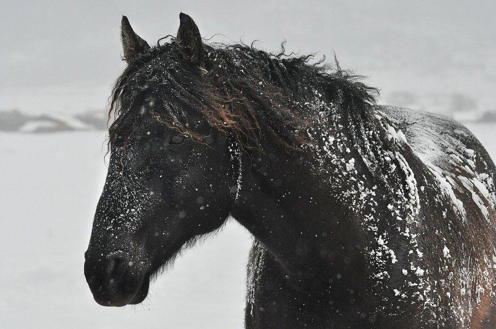 Snowyhorse.jpg