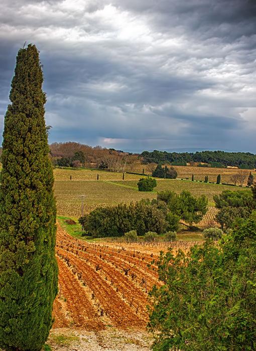 Vineyar,-Provence.jpg