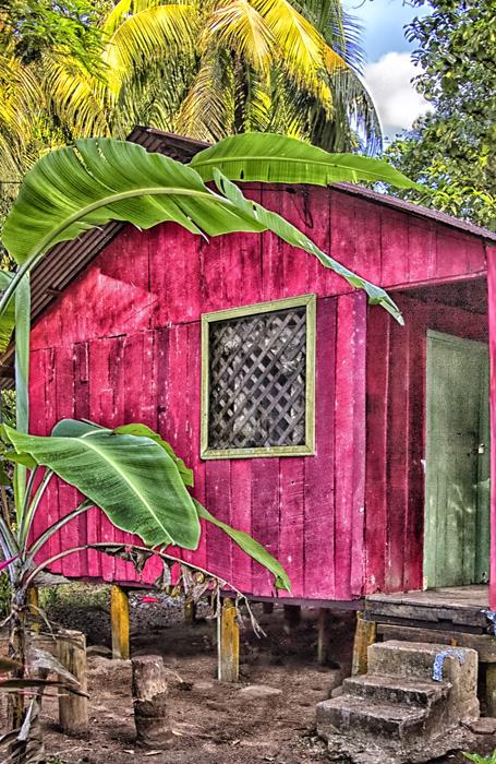 JungleRedhouse.jpg