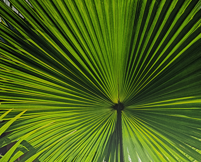 Green1-68_HDRFinal.jpg