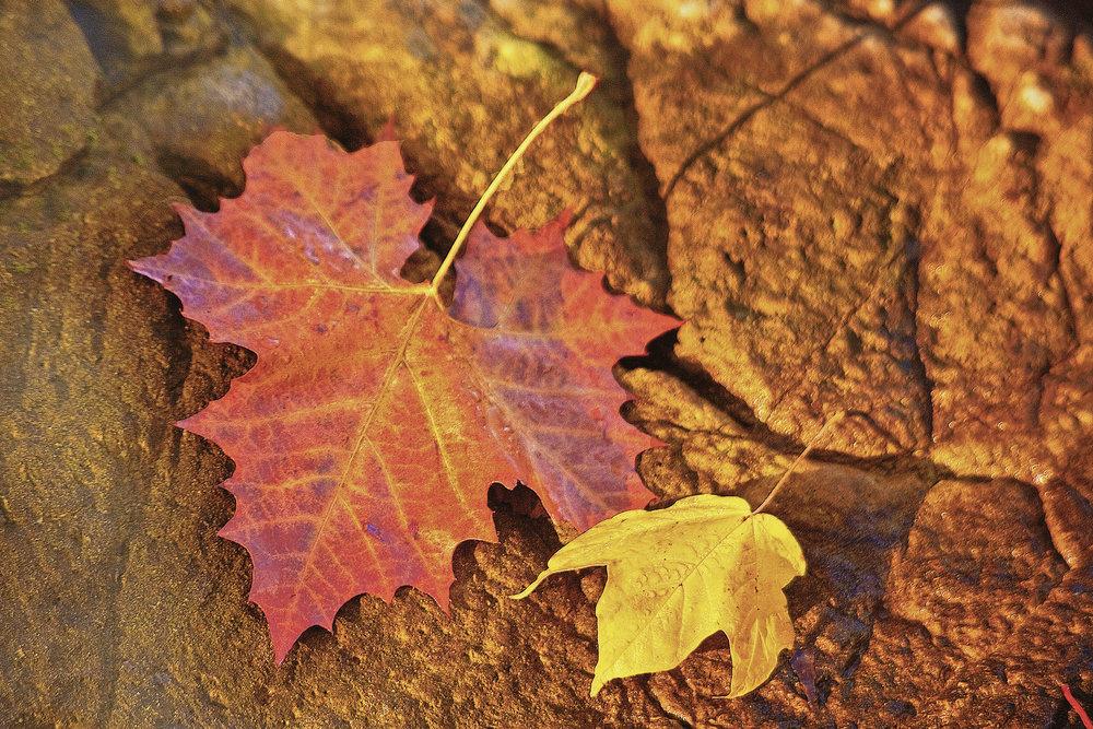 AutumnLeavesPhToolsFINAL12x18.jpg