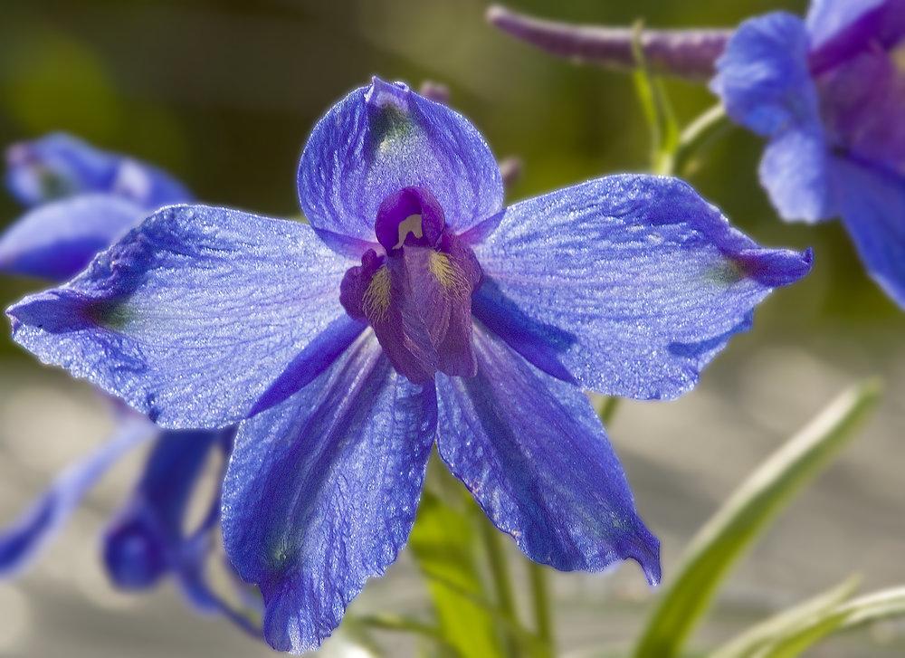 BlueButterfly001.jpg